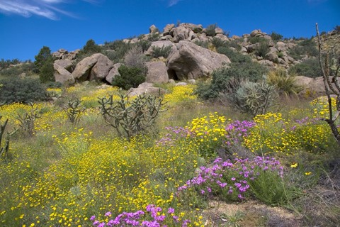Wildflowers: The Southwest Comes Alive in Spring