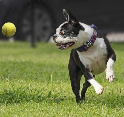 Dog Park at Camden Sugar Grove Apartments in Stafford, Texas